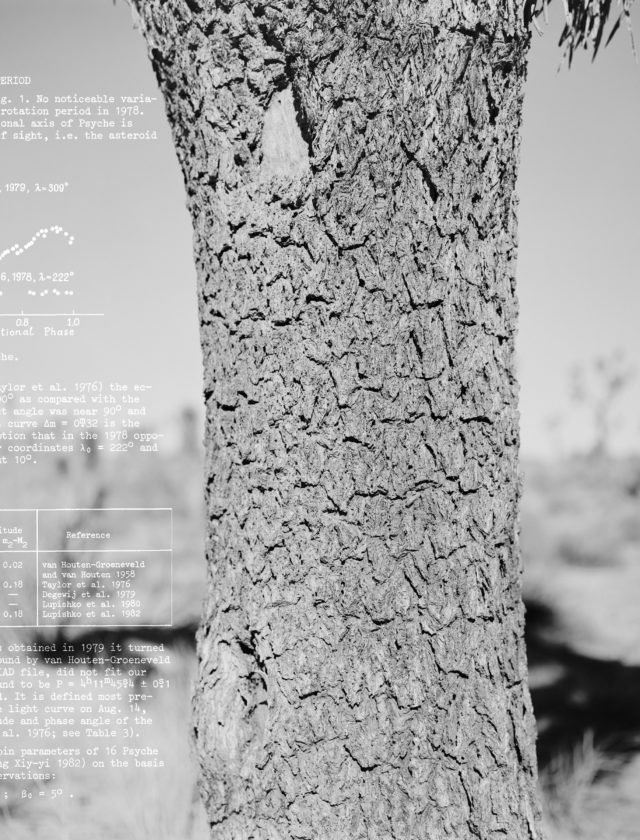 black and white photos of a tree overlaid with scientific data in white text.