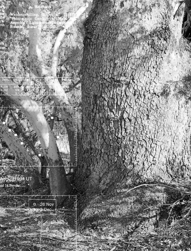 black and white photos of a tree trunk overlaid with scientific data in white text.